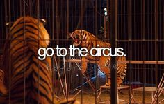 Go to the circus