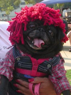 Raggedy Andy Pug....so ridiculously funny! But I do love Lulu and Raggedy Ann dolls soooo...