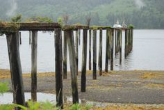 Abandoned Wharf at Winter Harbour Vancouver Island, British Columbia, Idaho, Book 1, Abandoned, Trail, Canada, Club, Winter