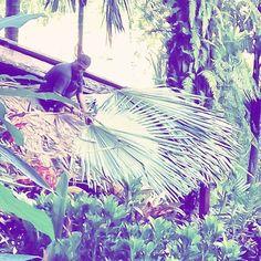 Just ordinary house maintaining in Thailand  #yogajourneys #yogaretreat #wyjazdyzjogą #wakacjezjogą #simplelife #wanderlust #travelblog #podróże #travel #instatravel #relax #relaks #beautifuldestination #travelblogger #sheisnotlost #house #islandlife #polishgirl #simplelife #jungle #junglelife #yogaeverywhere #Thailand #tajlandia #builder #roof #palmtree #palmleaf #palma