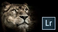 How to turn your Zoo Photography into Fine Art with Lightroom - http://tutorials411.com/2016/11/29/turn-zoo-photography-fine-art-lightroom/