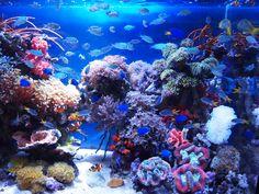 水族館 / aquarium