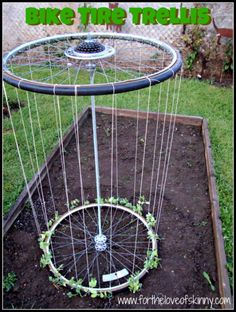 Recycled bike tire trellis for climbing plants in a garden.