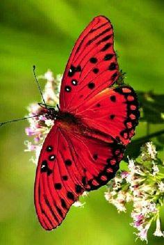 Butterfly Wallpaper, Butterfly Flowers, Butterfly Wings, Glass Butterfly, Beautiful Bugs, Beautiful Butterflies, Amazing Nature, Beautiful Creatures, Animals Beautiful