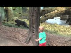 Toddler Playing With A Gorilla Toddler Hide And Seek At The Columbus Zoo (VIDEO) » DailyFunFeed