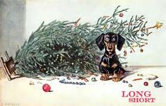 dachsund and christmas trees, don't mix
