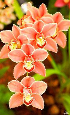 Flowers Gif, Butterfly Flowers, Beautiful Butterflies, Amazing Flowers, Love Flowers, Paradise Flowers, Glitter Images, Good Morning Flowers, Glitter Graphics