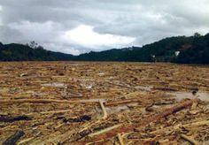 The 'logjam' on the Rajang river, Sarawak, October 2010