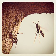 Repel wasps & hornets naturally & safely - preventative tips are great!