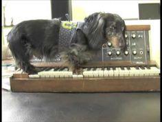 Wiener Dog On A Minimoog - Parry Gripp