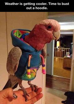 Appropriately dressed parrot…