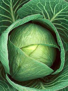 La col: estimula el sistema inmunológico, elimina bacterias y viruses y es bueno pcomo purificador de la sangre.