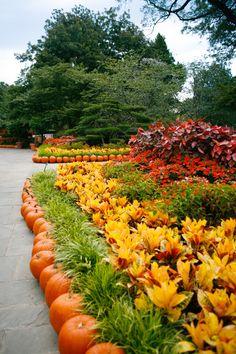 Dallas Arboretum, Autumn at the Arboretum, Fall, Pumpkins, Garden
