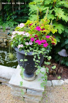 how-to-planter-vinca-coleus-600-wm