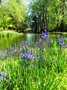 6 Recommended Vegetation Species To Plant Around Your Lake or Pond