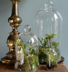 A terrarium is an enclosed environment containing plants for observation or research. Create your own using large apothecary jars.
