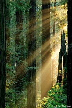 The sunrays peeking through the trees!!