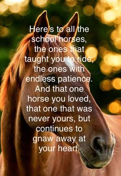 This is so true! It's been my god, yes years ago! He was my first true love. I was 9 and his name was Ahab. I loved him so much and I keep him tucked away in my heart. And I will never, ever forget him. Rodeo Quotes, Equine Quotes, Equestrian Quotes, Equestrian Problems, Funny Horses, Cute Horses, Horse Love, Beautiful Horses, Horses And Dogs