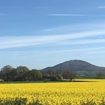 Rapeseed and the Wrekin #travelpics #travel #travelgram #shropshire #shropshirehills #landscape #landscape_lovers #spring #springiscoming