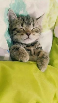 OMG--adorable