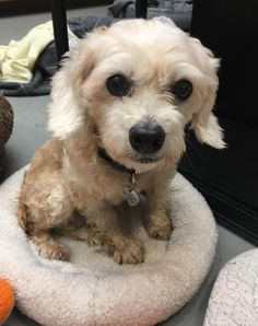 Pumpkin- Pumpkin was rescued out of a Korean slaughterhouse! Obviously by her age she was someone's pet stolen into the meat trade. She made it to the US safely and is now in a loving foster home awaiting her forever family. She is a very sweet and happy girl.