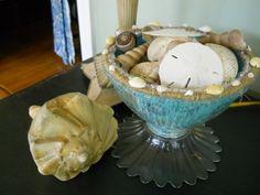 Interesting way to display seashells