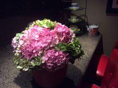Happy Hydrangeas from the yard.