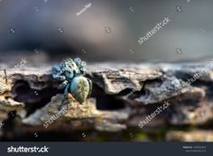 Closeup On Spider Siting On Log Stock Photo (Edit Now) 1709353354 Close Up, Spider, Insects, Photo Editing, Royalty Free Stock Photos, Illustration, Pictures, Image, Art