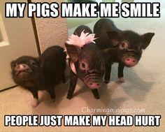 Charming Mini Pigs
