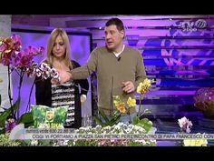 Amedeo Cetorelli ci spiega come curare le orchidee - YouTube