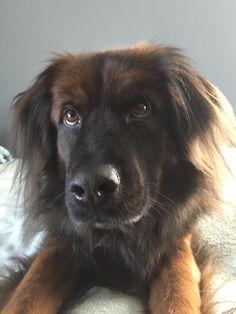 Who's a good boy ? http://ift.tt/2DsjkiN