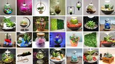ECO LED special gifts & decorations www.kdeco.ro www.facebook.com/kdeco.ro www.wonderfulterrarium.ro Special Gifts, Succulents, Led, Facebook, Design, Plant, Succulent Plants, Design Comics