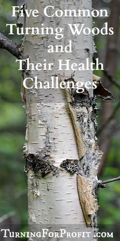 Several common turning woods can cause health challenges. Sensitivity to shavings, an allergic reaction; you want to identify the source and limit the impact.