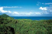 En los alrededores del Peak, la mayor elevación de Providencia se encuentran los bosques secos mejor conservados de la isla.