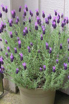 Container Gardening :: Hometalk