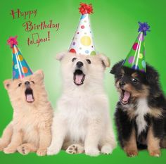 "Dog Puppy Birthday Greetings Card - Trio of dogs ""Happy Birthday To You"" Happy Birthday Puppy, Birthday Cheers, Happy Birthday Pictures, Happy Birthday Messages, Happy Birthday Greetings, Dog Birthday, Birthday Greeting Cards, Birthday Wishes, Birthday Quotes"
