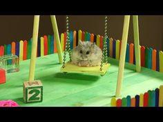 Lief! Hamster wordt blij van speeltuin