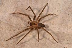 102 best spider images spiders bugs amphibians rh pinterest com