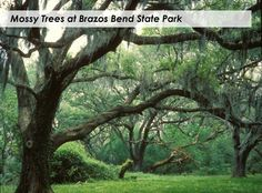 Mossy Trees at Brazos Bend State Park, near Houston