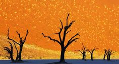 Dead Trees Park, Namibia (this is not a painting)