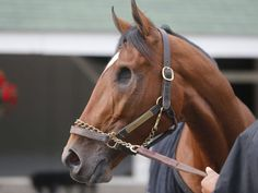 One-eyed underdog Patch is the 'feel-good story' of the Kentucky Derby