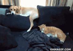 http://barkpost-assets.s3.amazonaws.com/wp-content/uploads/2013/04/dog-slaps-cat-tail1.gif