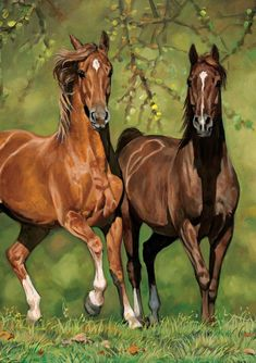 Horse Art New Blank Note Card Matching Envelope Inside of Card is faintly shadowed to copy front designMatching Envelope shows same Vintage Designs Bold Handsome and Playful designs on these new Blank Greeting Cards withmatching envelopesuncoated tree fre Horses And Dogs, Cute Horses, Horse Love, Wild Horses, Animals And Pets, Most Beautiful Horses, All The Pretty Horses, Horse Photos, Horse Pictures