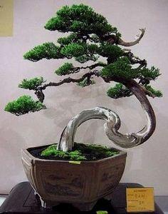 ●●How do you like this cute #bonsai tree?♦●       #BonsaiInspiration