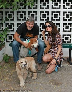 New addition to the family: George and Amal Clooney adopted rescue pup Millie, a basset hound mix, from San Gabriel Valley Humane Society shelter on Wednesday. They are also seen here with their rescue dog Louie