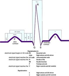 ECG complex and its connection with physiology. Nursing Information, Nursing School Notes, Nursing Schools, Medical School, Cardiac Nursing, Pharmacology Nursing, Respiratory Therapy, Nursing Tips, Funny Nursing