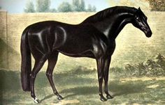Stubbs's painting of the Godolphin Arabian, perhaps the most famous of the three 'foundation sires'