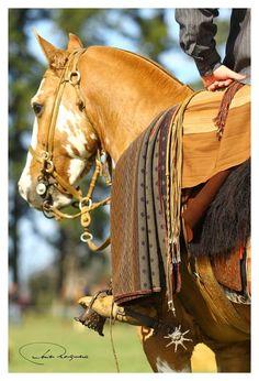 Clasificatoria Pergamino 2017 - foto Javier Mosquera Horse Adventure, Equestrian Chic, Tack Sets, Rio Grande Do Sul, Saddles, David, Horses, Animals, Folklore