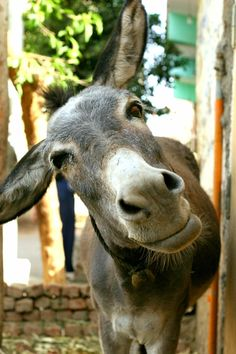 Egypt donkey by Ria van Capel, and pets esl questions about and pets difference of cubes Farm Animals, Animals And Pets, Funny Animals, Wild Animals, Zebras, Beautiful Horses, Animals Beautiful, Cute Donkey, Donkey Funny