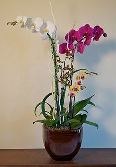 Live Orchid Arrangements | Encinitas Orchids | Orchid Arrangements ...